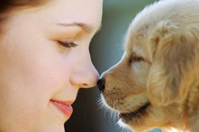 como-mimar-o-seu-melhor-amigo-canino